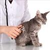 Ветеринарные клиники в Севске